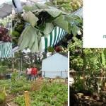 Mais sobre a feira agroecológica da Freguesia.