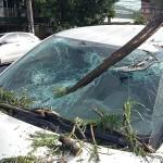 Campanha para resolver o estrago nas árvores do bairro provocado pelo corte inadequado e exagerado. Participe!