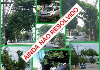 A poda irregular das nossas árvores continua sem os cuidados da COMLURB !