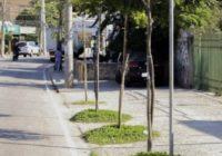 Rearborização na Freguesia: O programa perdeu fôlego!