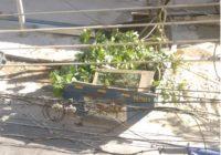Mais cortes de árvores na Freguesia por motivos de $$$. Agora na Comandante Rubens Silva!