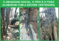 Árvore centenária foi queimada e precisou ser retirada! Absurdo provocado pela questão social no nosso bairro, também.