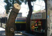 Ninguém corta uma árvore dessas sem ser visto!
